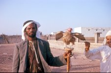 Mahra of Arabia practices falconry